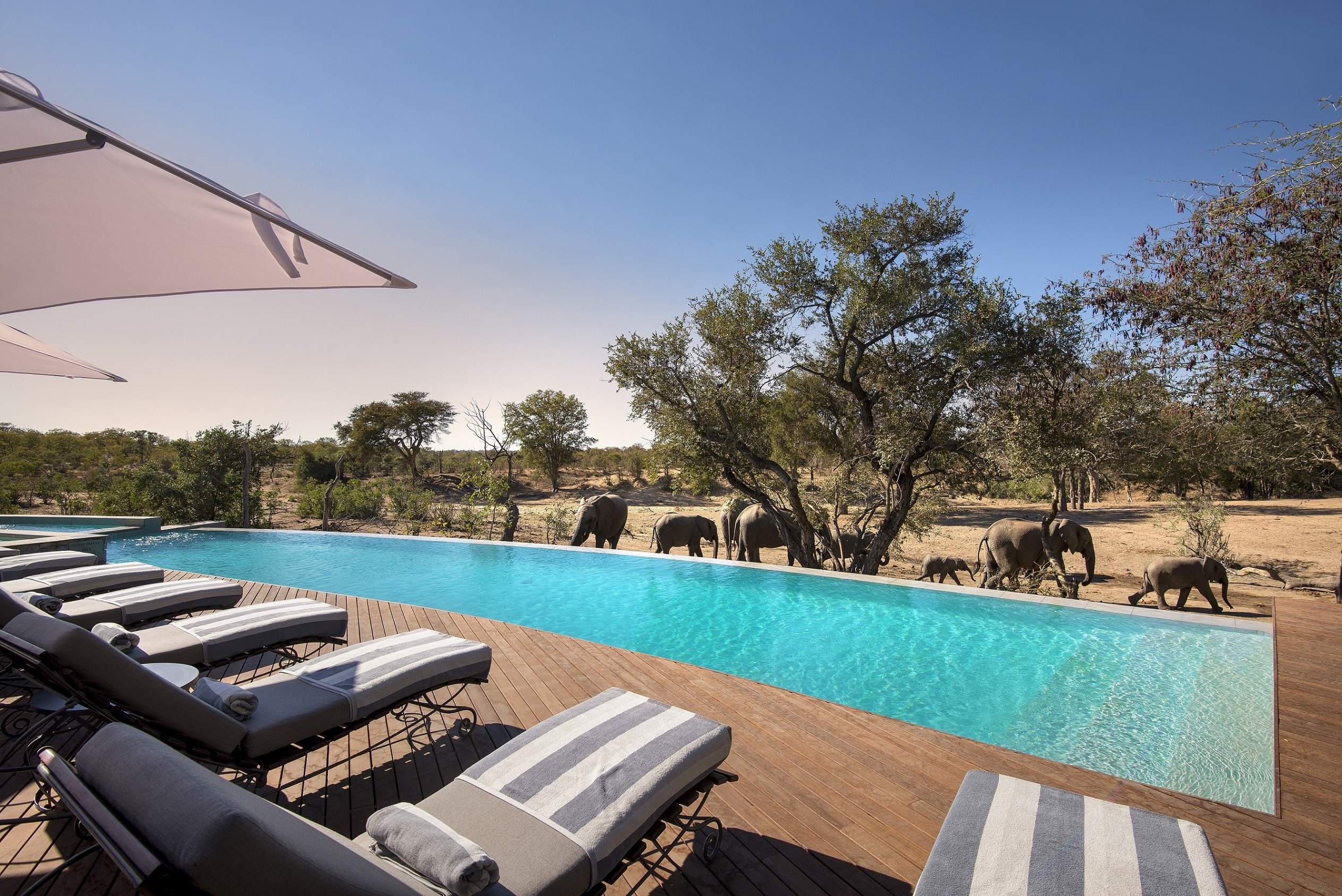 andbeyond-ngala-safari-lodge-pool1